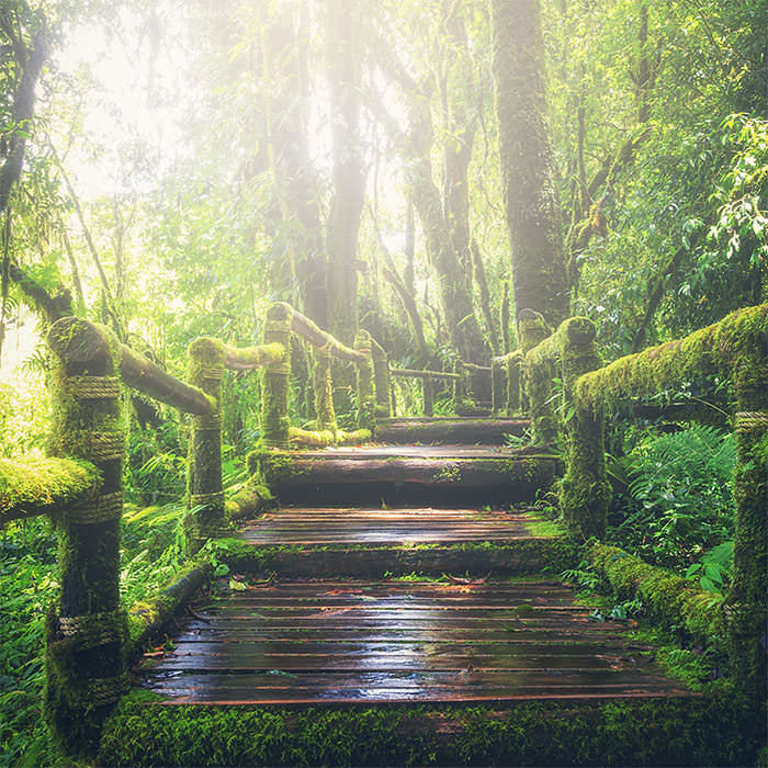 Photo of a walkway in the woods that is covered in moss